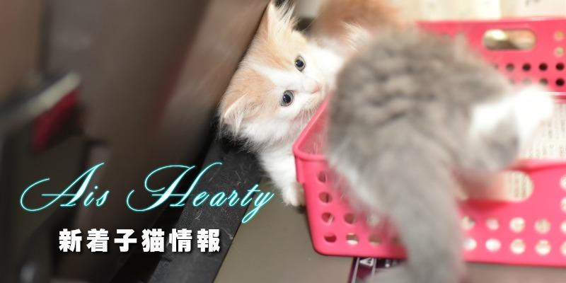 子猫NEWS